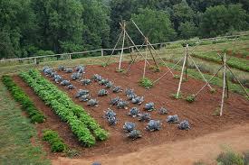 orto-coltivare