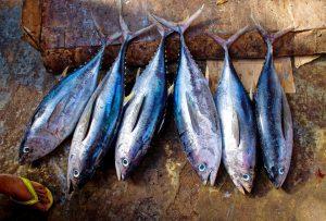 tuna-fish-954073_960_720