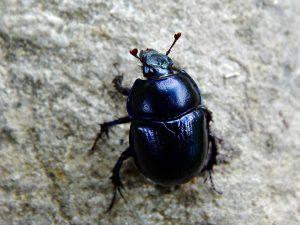 scarafaggio-casa